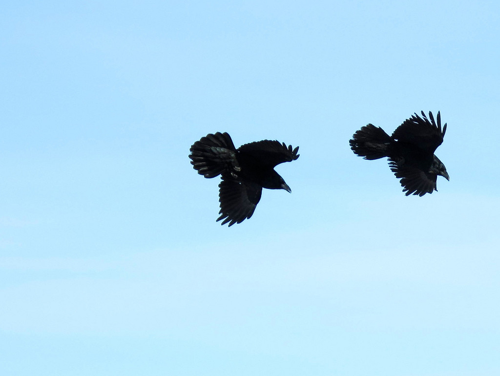 Whooo is God? An Autumn Family Bible Adventure:  Ravens