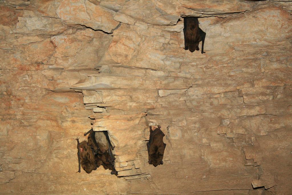 Whooo is God? An Autumn Family Bible Adventure:  Bats